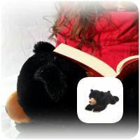 Willo l'ours noir